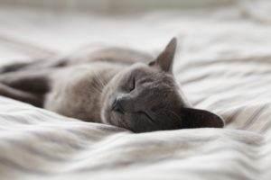 Sommeil de qualité et mieux dormir - Opensynaps, hypnose, sophrologie